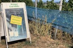 Weingut-Graf-Müller_Wein-Genuss-Am-Morschberg-2019-6